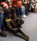 Blind man with guide dog sitting in the cinema