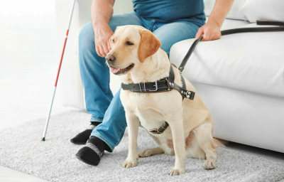 Blind man with guide dog sitting on sofa at home