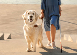 blind woman walking with guide dog