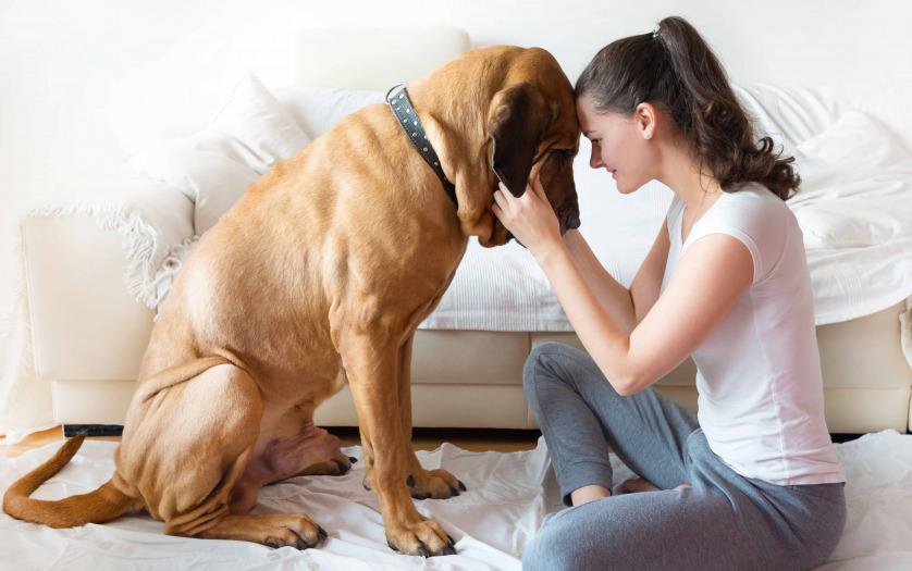 woman and her dog fila brasileiro breed in home