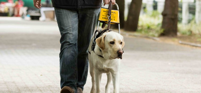 blind man walking with guide dog