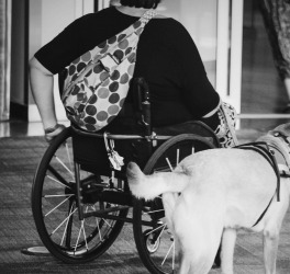 a woman in wheelchair with guide dog