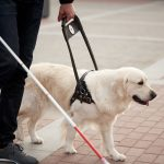 Young blind man with stick and guide dog walking